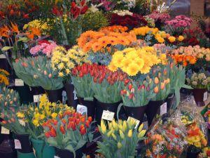 Kwiaciarnia pełna pięknych kwiatów