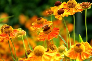 kwiaty natura